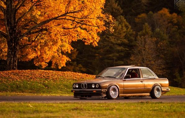 Picture autumn, light, tree, foliage, BMW, e30, 325si