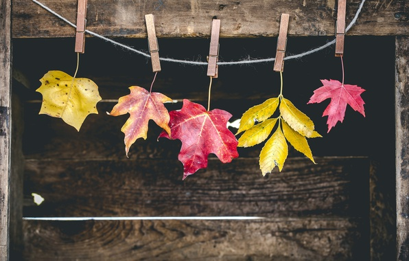 Picture autumn, leaves, clothespins