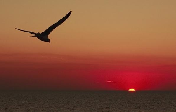 Журавли летят закаты над заливом