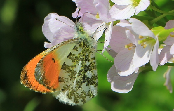 Picture macro, flowers, butterfly, dawn