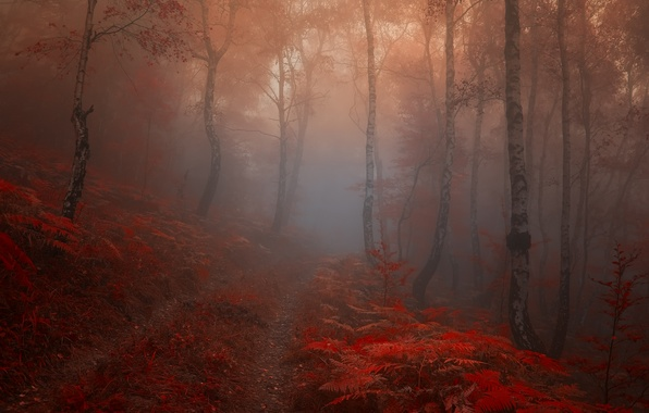 Picture road, autumn, forest, leaves, trees, fog, Nature, trail, morning, red, birch
