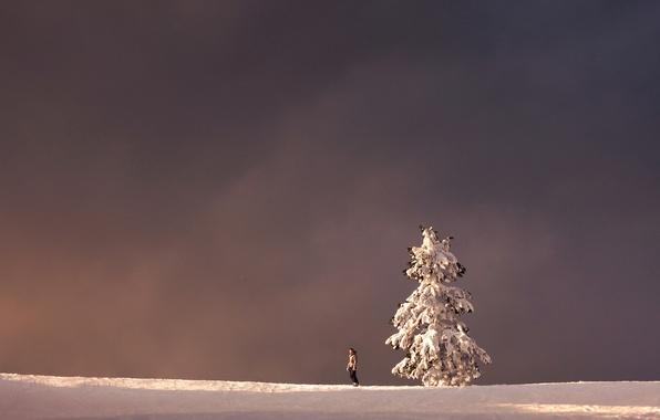 Picture winter, landscape, tree, people