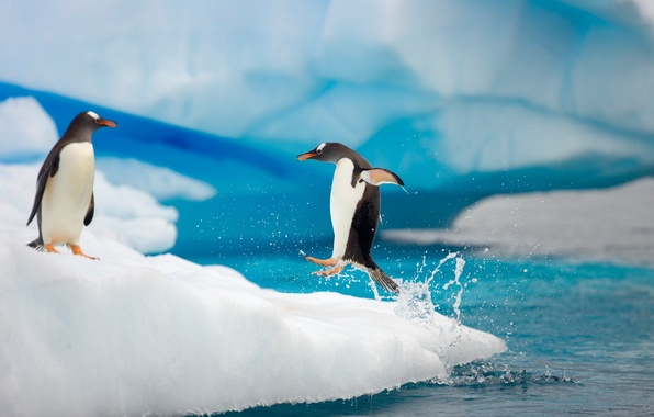 Picture drops, squirt, movement, the ocean, jump, ice, paws, penguins, pair, flight, floe