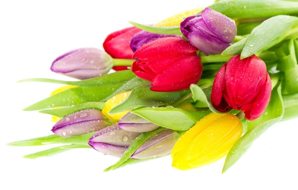 Picture bouquet, yellow, tulips, red, lilac
