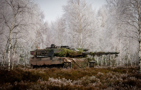 Picture forest, grass, trees, tank, combat, Leopard 2A6M