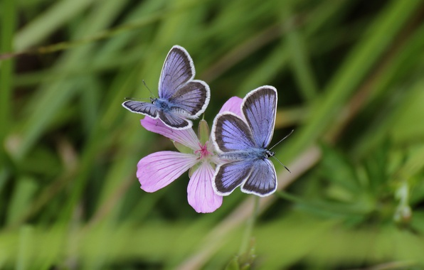 Picture flower, grass, macro, butterfly, background, widescreen, Wallpaper, wallpaper, grass, flower, widescreen, butterfly, background, macro, bokeh, …