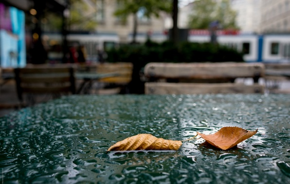 Picture Drops, The city, Cafe, Autumn, Leaves, Table, Rain