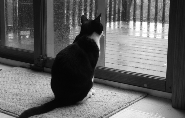 Picture sadness, cat, rain, window, Black and white, 158