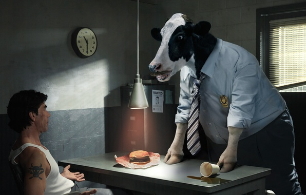 Picture cow, the investigator, questioning