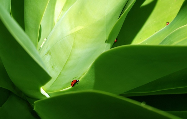 Picture leaves, beetle, Green