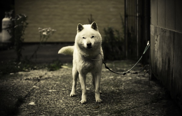 Picture each, dog, the guardian