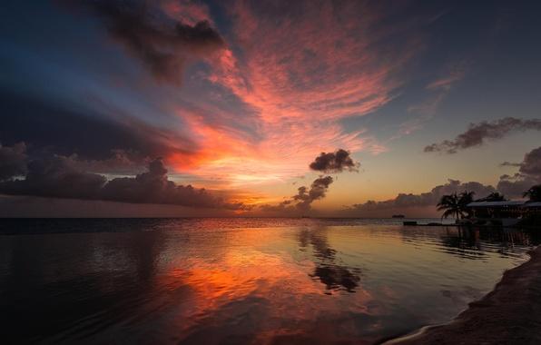 Wallpaper Beach, Palm Trees, The Ocean, Dawn, Resort