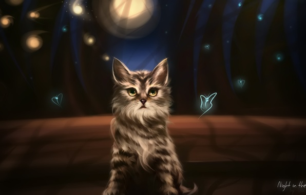 Picture cat, bench, night, Park, the evening, lights, lights, shadows, kitty, wild