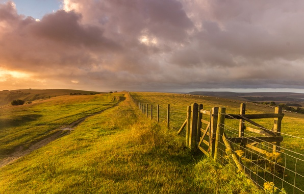 Picture field, grass, landscape, nature, hills, the fence, sheep, England, the evening, fence, UK, farm, England, ...