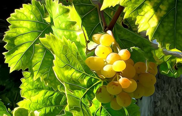 Photo wallpaper leaves, line, berries, paint, harvest, grapes