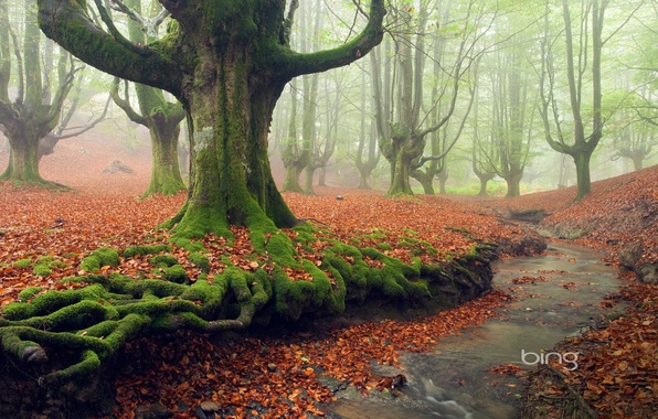 Picture autumn, forest, leaves, trees, fog, Park, stream, moss
