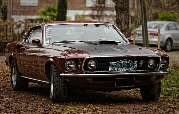 Picture Mustang, Ford, the front, Muscle car, Muscle car