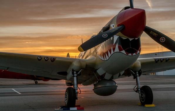 Wallpaper P-40 Warhawk, fighter, the airfield, sunset ...