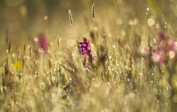 Picture summer, grass, flowers, Rosa, glare, meadow