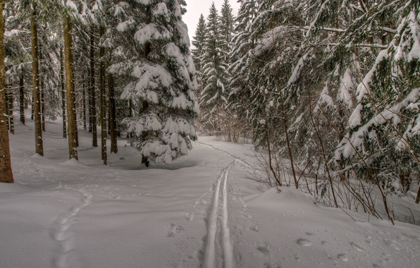Picture winter, forest, snow, trees, traces, nature, trail, frost, forest, Nature, trees, winter, snow, path, frost