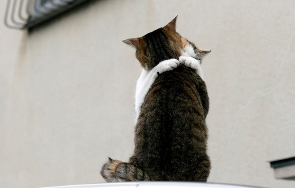 Picture love, cats, meeting, 150