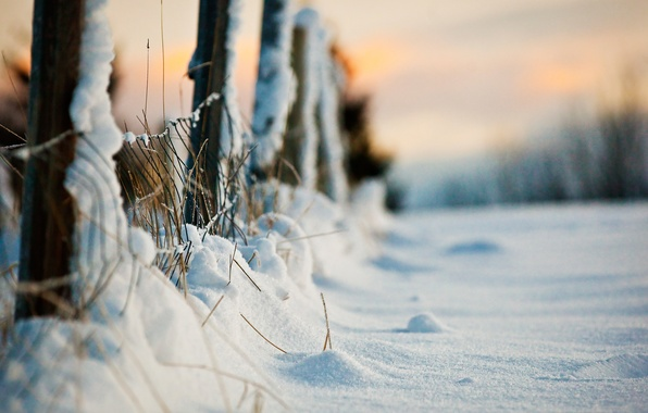 Picture winter, macro, snow, the fence, the evening