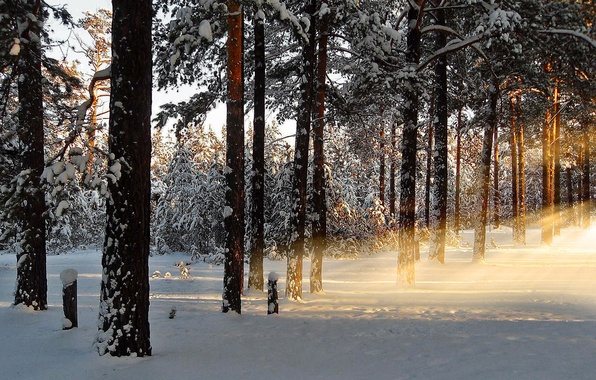 Picture winter, forest, rays, snow, nature, dawn, morning