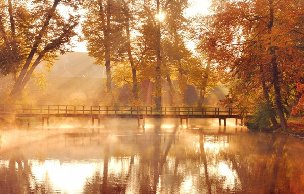 Picture forest, bridge, fog, river, photo, dawn, morning