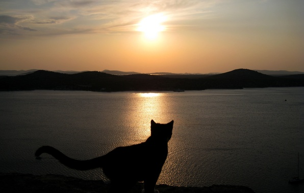 Photo wallpaper Sunset, Sea, Cat, The sky, Silhouette