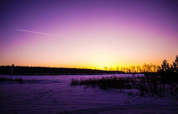 Picture winter, road, forest, the sky, grass, snow, trees, sunset, traces, nature, beauty, Tomorrow dorffer