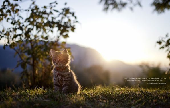Picture cat, grass, light, nature, the inscription, kitty, words, tsytata, Portuguese