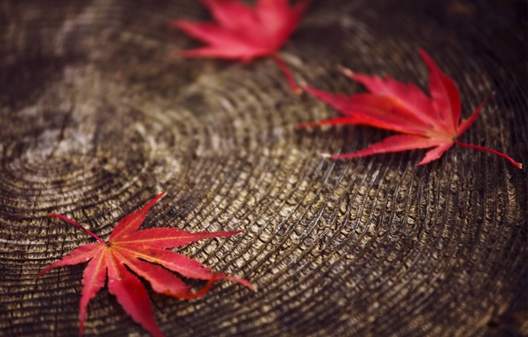Picture macro, blur, Leaves, stump, red, autumn