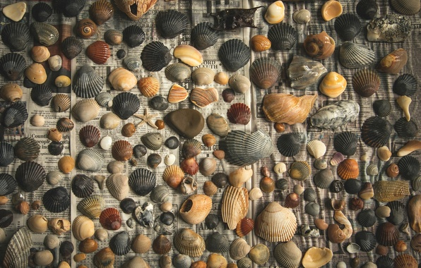 Picture pebbles, background, newspaper, shell, chips