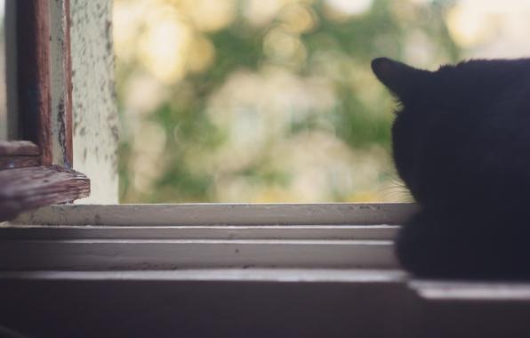 Picture summer, cat, leaves, heat, tenderness, window, bokeh