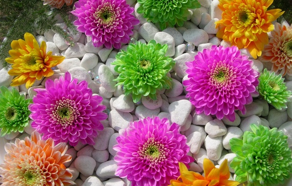 Picture white, flowers, orange, green, pink, Pebbles