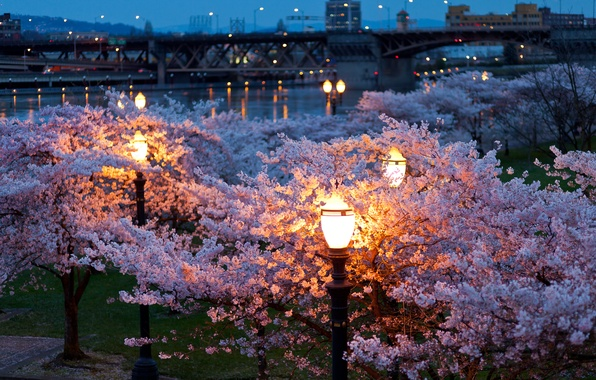 Picture trees, night, the city, lights, Park, river, color, spring, the evening, lights, bridges, bloom