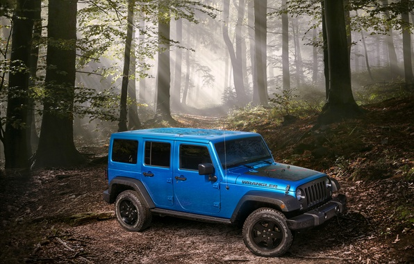Picture forest, jeep, Wrangler, Jeep, 2015, Wrangler