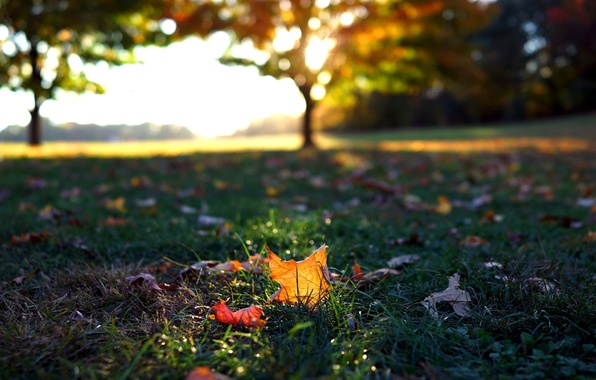 Picture greens, autumn, grass, leaves, macro, trees, background, tree, widescreen, Wallpaper, wallpaper, leaves, falling leaves, widescreen, …