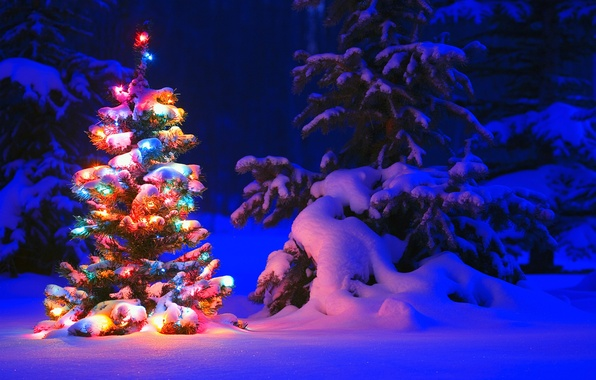Photo wallpaper winter, light, snow, trees, night, lights, lights, tree, tree, spruce, forest, Snow, winter, tree, garland