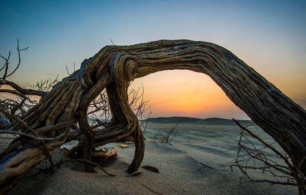 Picture sand, beach, sunset, tree, desert