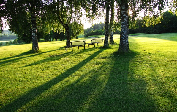 Picture greens, summer, grass, lawn, foliage, view, dal, plain, space, birch, benches, lawn, Sunny day