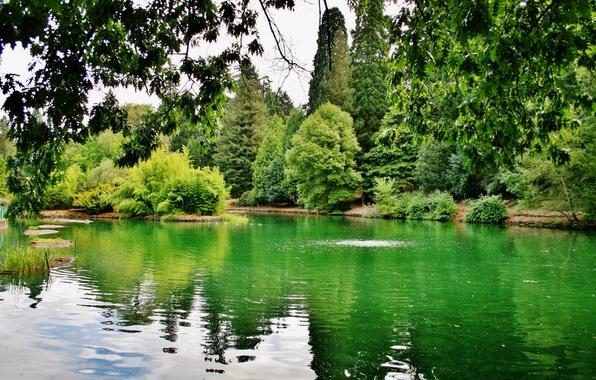 Picture greens, trees, branches, lake, USA, Oregon, Portland, Laurelhurst Park