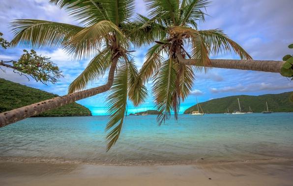 Picture sand, sea, beach, tropics, palm trees, coast, Bay, yachts