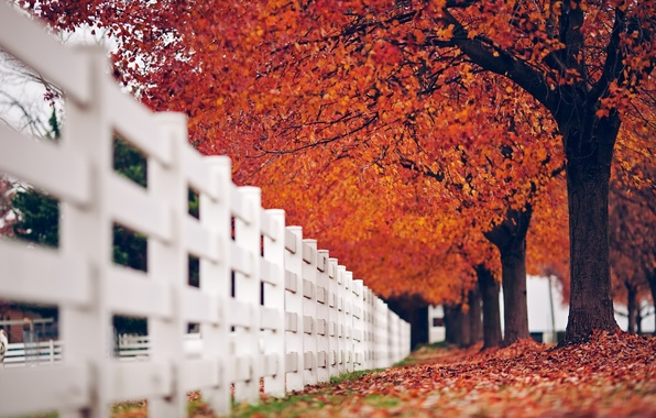 Picture autumn, white, leaves, macro, trees, red, nature, background, tree, widescreen, Wallpaper, the fence, fence, the …