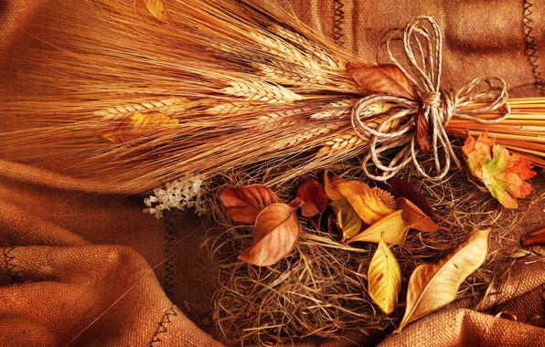 Picture wheat, autumn, leaves, grain, yellow, spikelets, ears