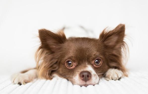 Photo wallpaper dog, look, each