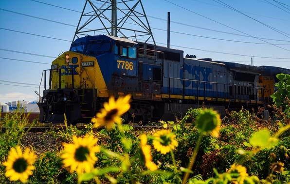 Picture sunflowers, nature, rails, train, railroad, locomotive