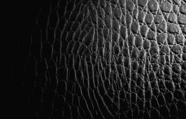 Picture background, black, leather, crocodile, texture, reptile