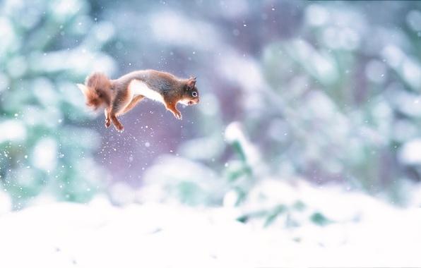 Picture snow, jump, walnut, protein