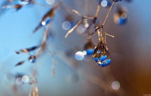Picture autumn, blue, drop, blur, JanaPanfilova